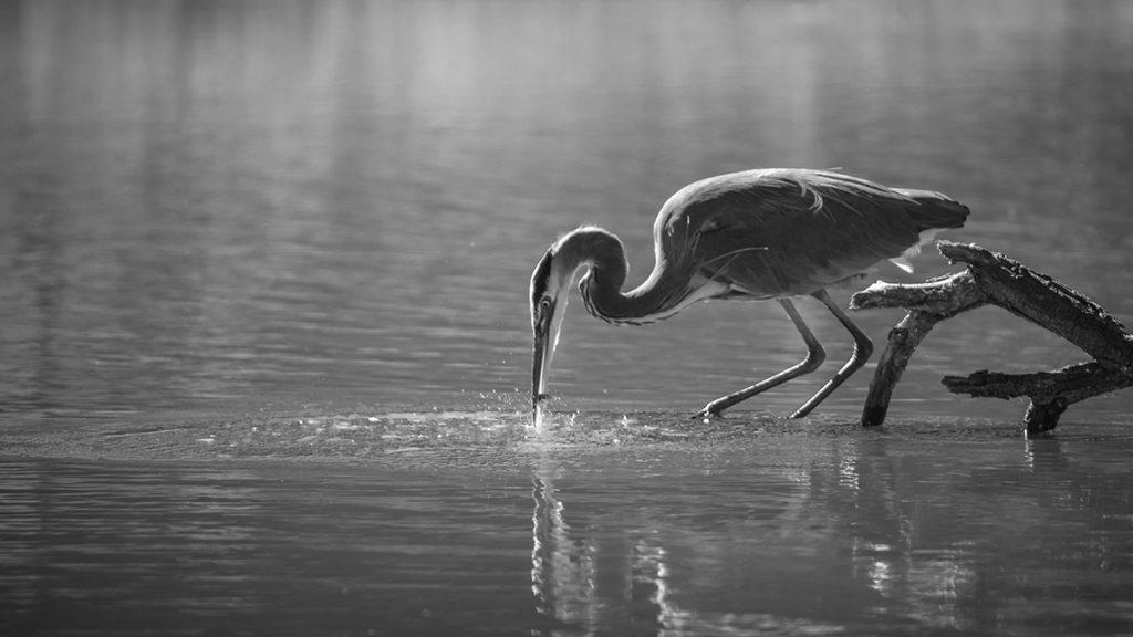 Lake Manyara-birdlife