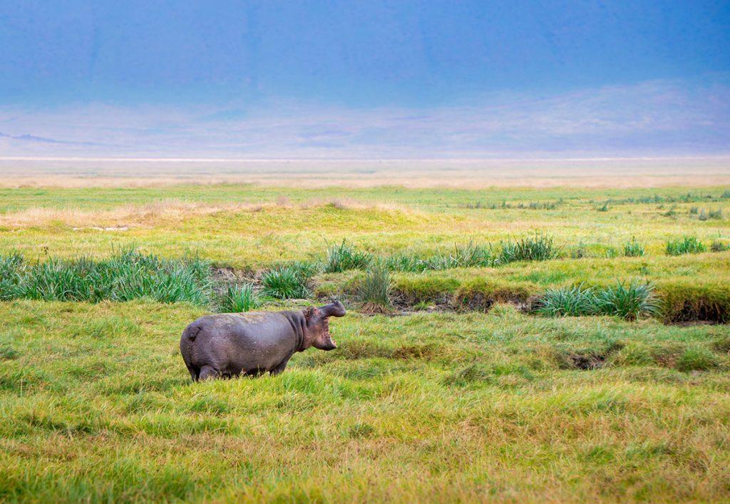 Ngorongoro Crater-hipo