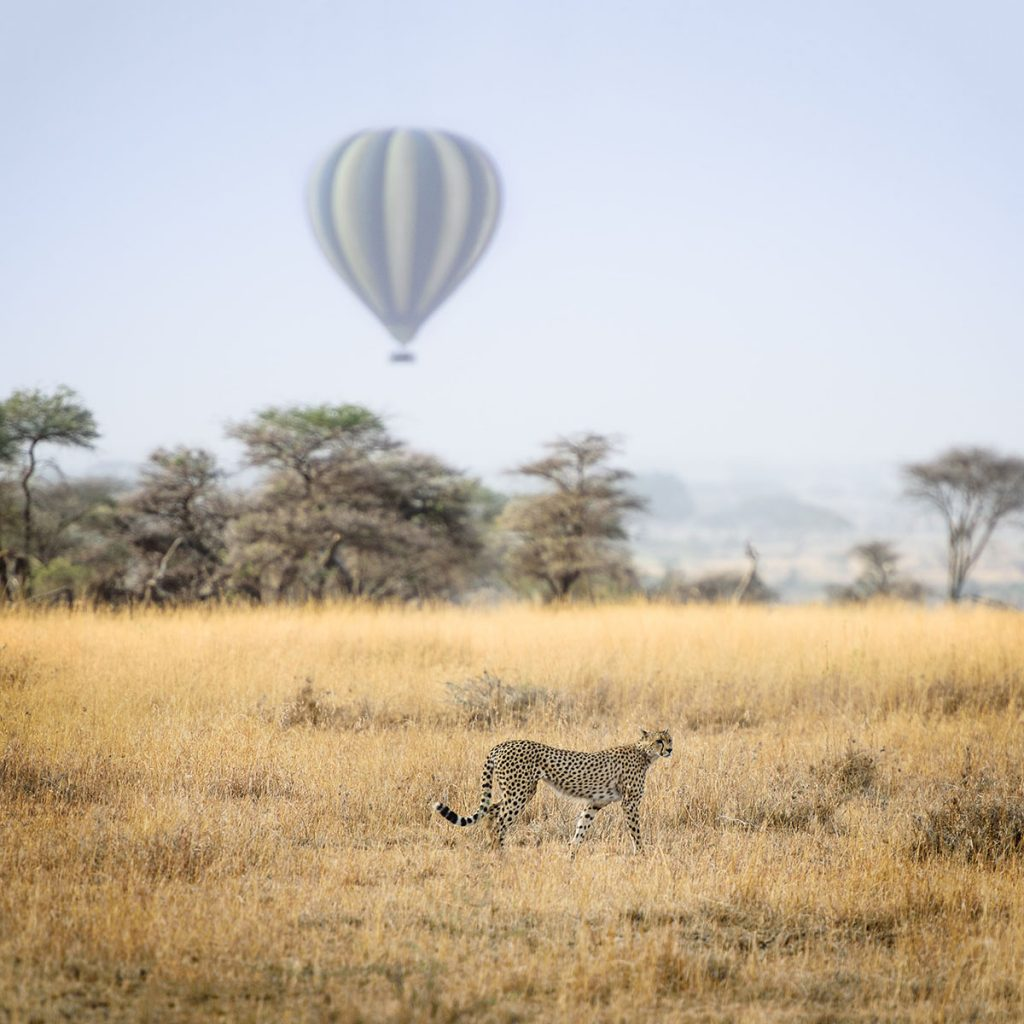 african-air-balloon