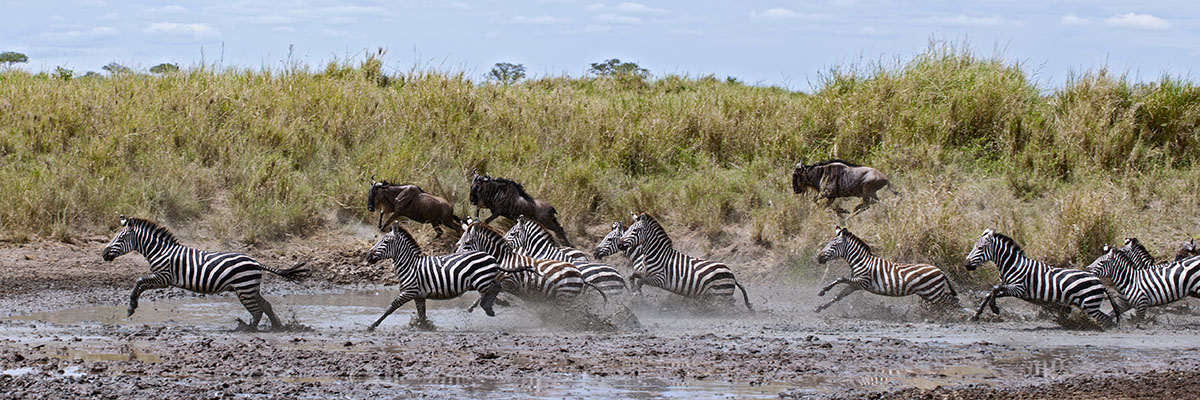 safari-costs